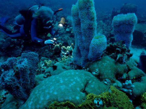underwater-scene-dale_3555_990x742